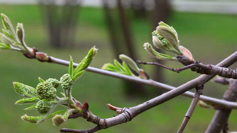 Spring Stock Video Footage