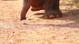 Elephant stock footage