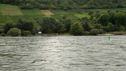 Plantations near the Rhine river 2 Stock Video Footage
