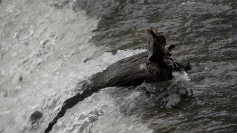Water rushing on the river Footage