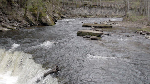 The river with rushing water Footage