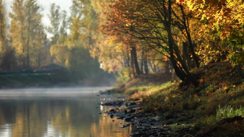 River early morning leaf fall Footage