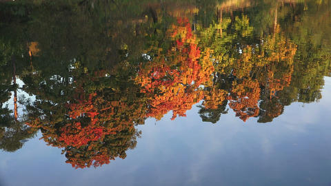 Reflection of autumn trees in the water. Autumn La Footage