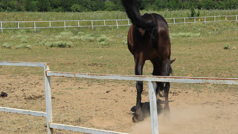 Baulky brown horse Footage