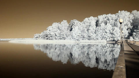 Infrared flora: reflections of trees in a water 2 Stock Video Footage