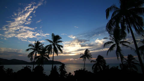 Sunset and palms loop Stock Video Footage
