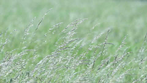 Wild grasses Stock Video Footage