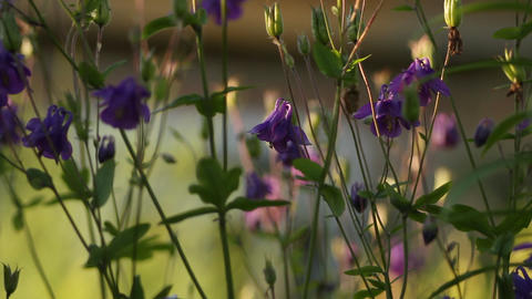 Flowers In The Garden stock footage