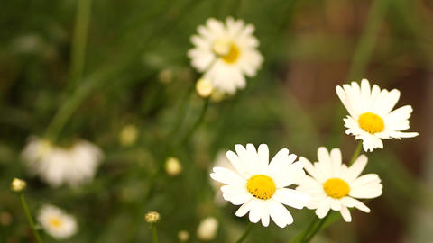 flowers in the garden Footage