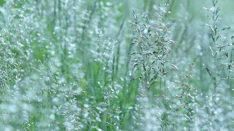 Wild grasses Stock Video Footage