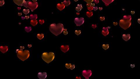 HeartDOG73498 Stock Video Footage