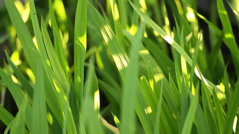 beautiful green grass in the garden Footage