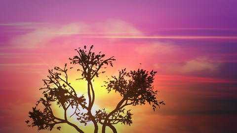 sunrise africa tree Animation