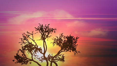 sunrise africa tree Stock Video Footage