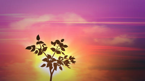 sunrise small tree Animation