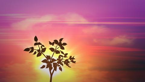 sunrise small tree Stock Video Footage
