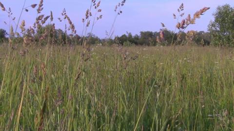 field Stock Video Footage