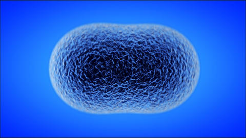 Cell Division Stock Video Footage