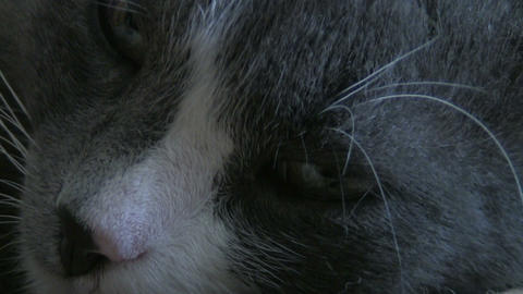 old cat Stock Video Footage