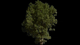 tree 04 Stock Video Footage