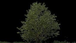 tree 06 Stock Video Footage