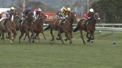 race horses captured in slow motion Stock Video Footage