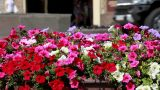 A Lot Of Bright Colors On A City Street stock footage