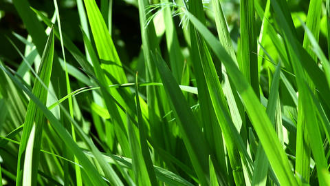 beautiful green grass in the garden Footage
