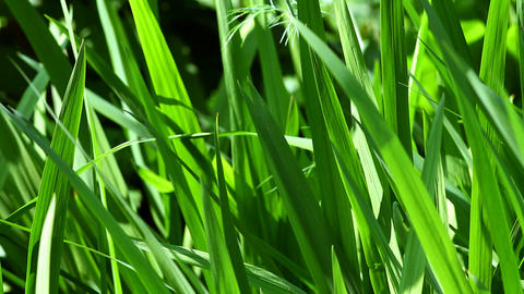 beautiful green grass in the garden Stock Video Footage