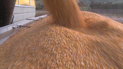 corn into truck Stock Video Footage