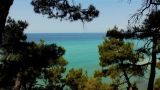 Sea Through The Trees stock footage