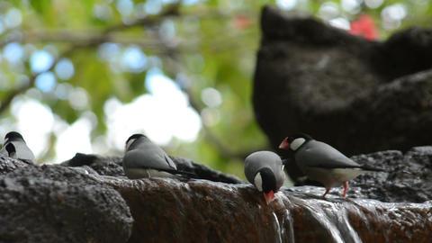 Bird Bath Footage