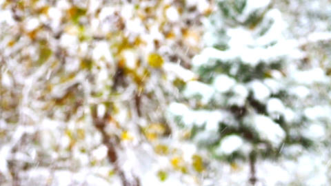 Snow Covered Pine Tree And Gentle Snow Falling stock footage