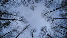Trees and Cloudy Sky Rotating Footage