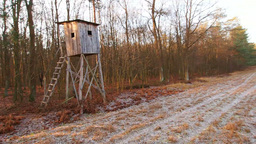 Box Hunting Stand in the forest in Poland Live Action