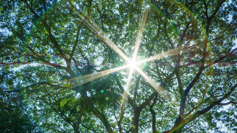 Sun Shines Through The Leaves Of A Tropical Tree stock footage