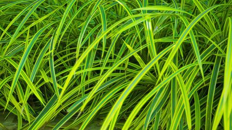 Decorative vegetation Footage