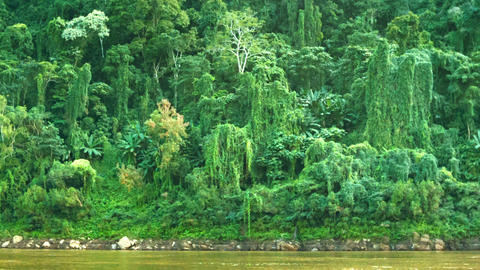 Jungle on the banks of the Mekong river. Laos Footage