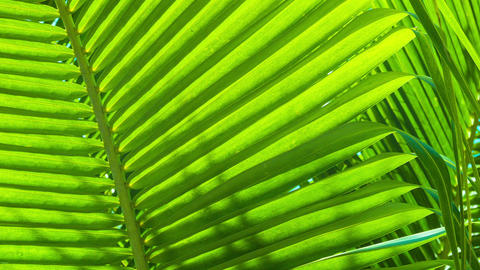 Palm leaves close-up. Tropical abstract background Footage