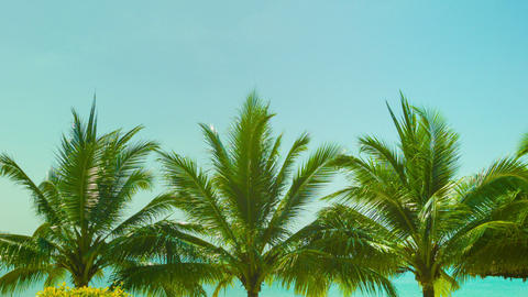 Blue sky above the tops of coconut trees on a trop Footage