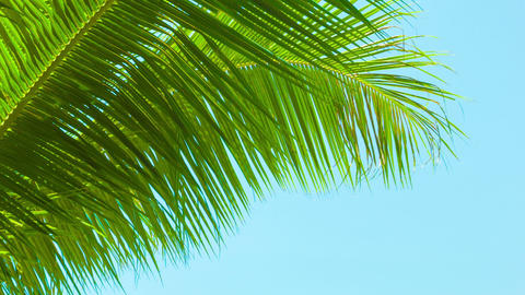 Light breeze rustles the palm fronds on sky backgr Footage