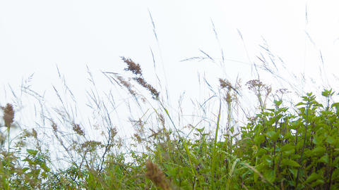 Meadow grass sway in the wind. Highland slope Footage