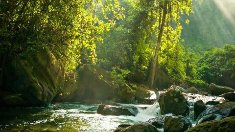 Creek flowing between rocks in the rainforest Footage
