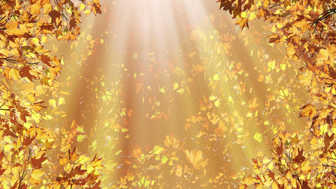 Autumn Backgrounds 0