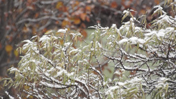 Snowfall In Early Winter In The Garden stock footage
