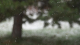 Snowfall Against Blurred Pine Tree On Backgrou stock footage