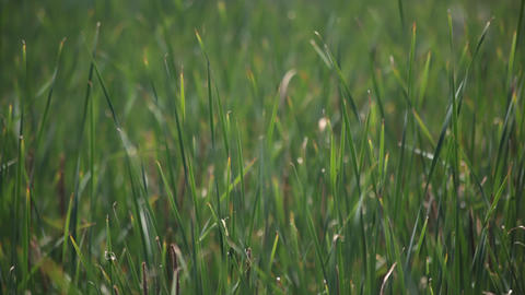 Swaying grass Footage