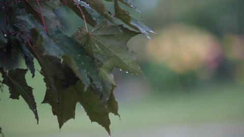 Leaves in the rain Stock Video Footage