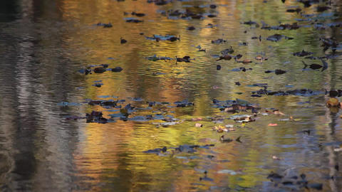 Drifting leaves Stock Video Footage