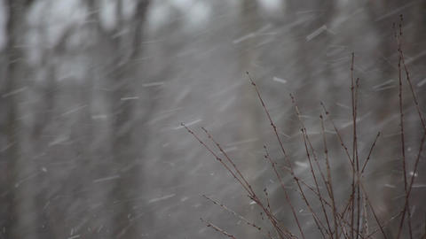 Falling snow Stock Video Footage